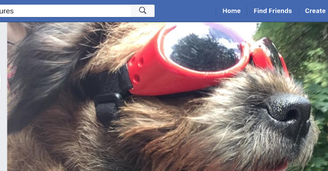 Border Terrier Adventures facebook page header image showing the head of a border terrier in red doggles (goggles for dogs) with the wind through it's fur