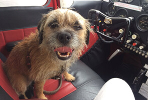border terrier sat in the cockpit of a light aircraft ready for take off facing the camera looking happy