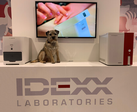 border terrier sat on the stand at IDEXX laboratories stand at Vet London exhibition